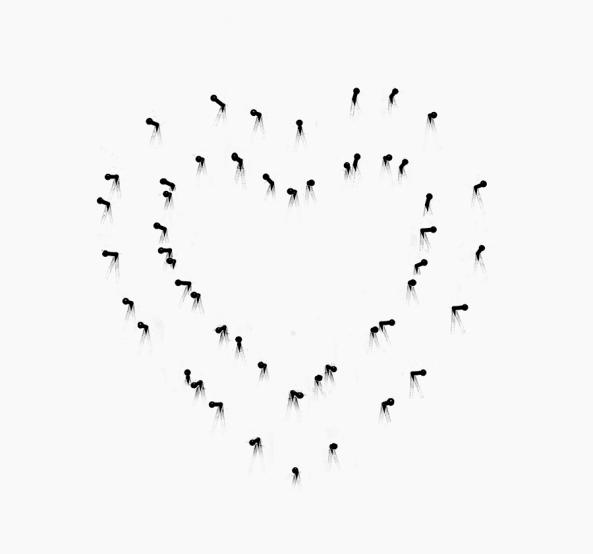 heart-net
