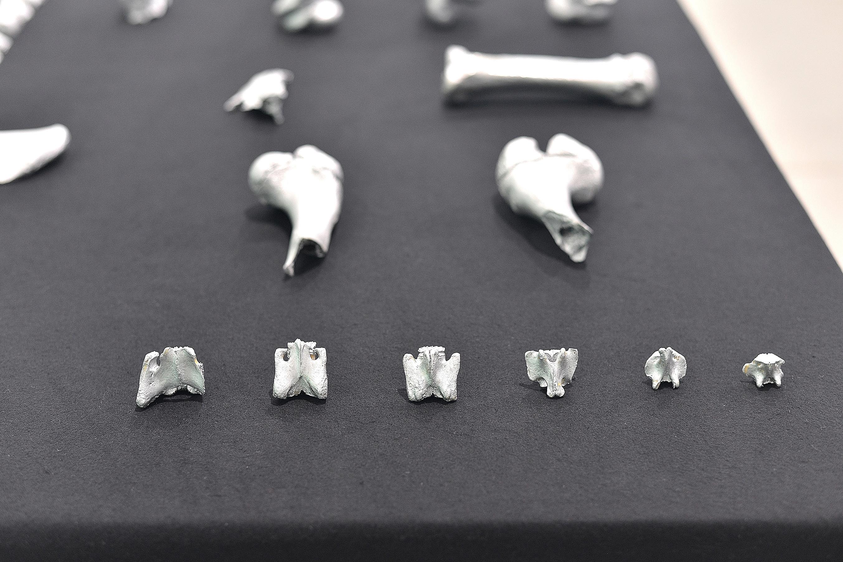 ossos 6.jpg