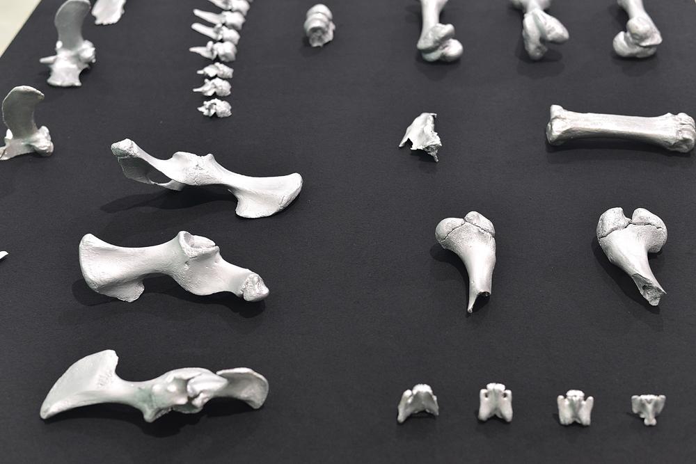 ossos-7